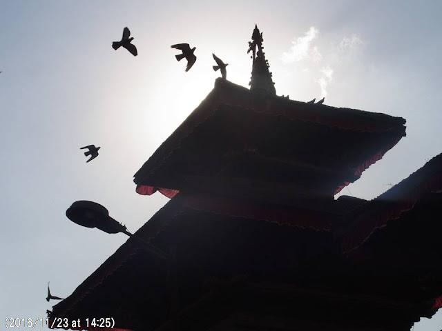 写真9 ダルバール広場の破壊された寺院の上を飛ぶハトの群れ