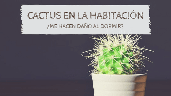 cactus en macetas jardin