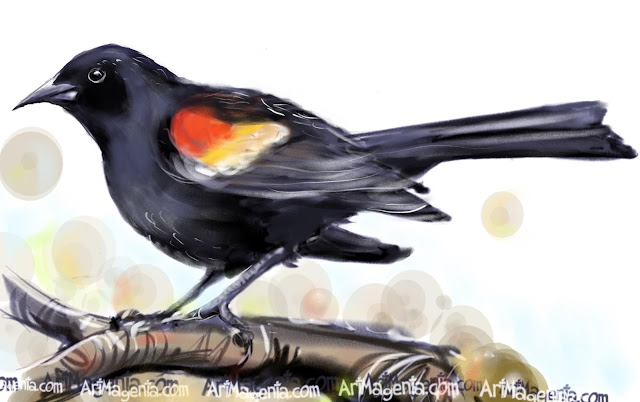 Red-winged Blackbird bird painting by Artmagenta