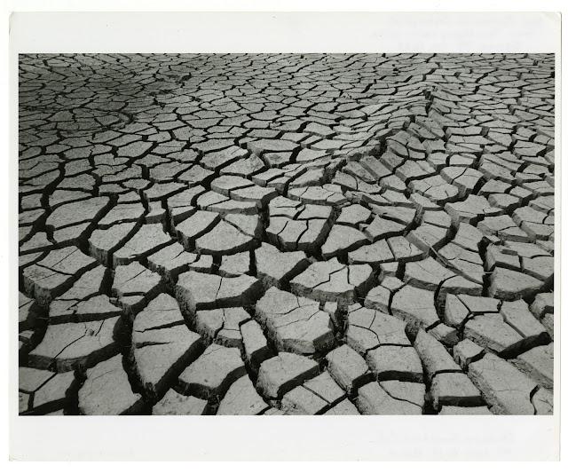 Dried Marsh Mud