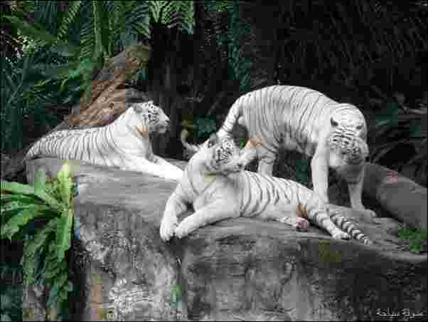 اجمل حديقة حيوان في اليابان