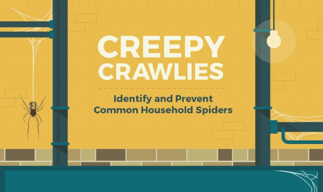 Creepy Crawlies: Common Household Spiders and Prevention Tips