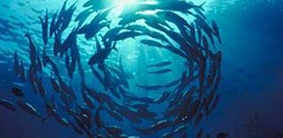 Biota Laut dan Lingkungannya