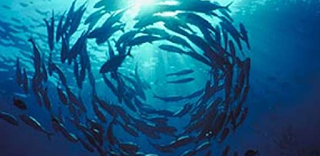 KEBIASAAN MAKAN IKAN ( FISH FOOD HABITS )