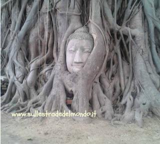 La testa del Budda di Ayutthaia