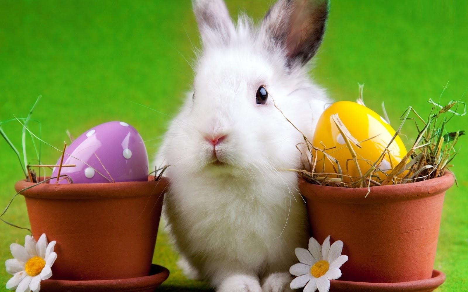 Beautiful Easter Wallpapers - Beautiful Desktop HD ...