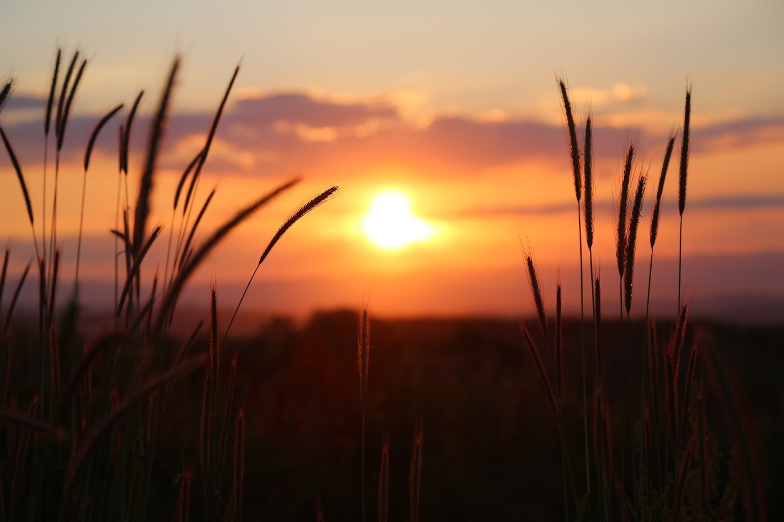 Download 61+ Gambar Pemandangan Senja Paling Bagus Gratis