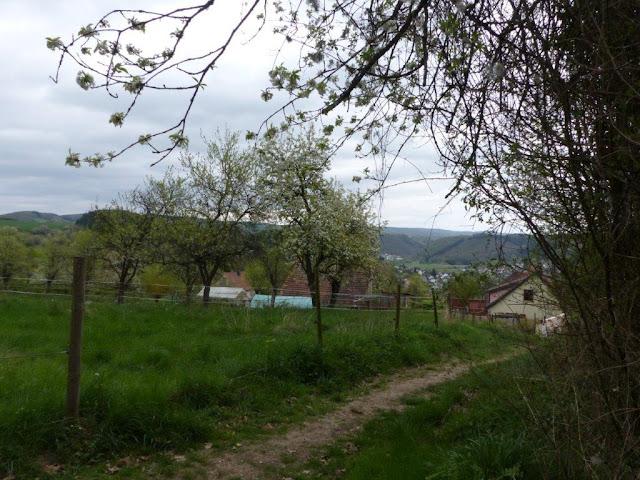 Hunsrück Urlaub Wanderurlaub mit Hund Ostern Traumschleifen Saar-Hunsrück-Steig Vitaltour Wildgrafenweg