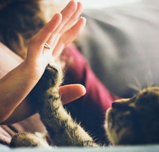 cara berbicara sama kucing
