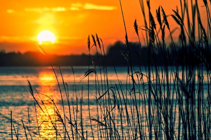 POEMA DE LA SEMANA Un lago de sol | Minerva Margarita Villarreal
