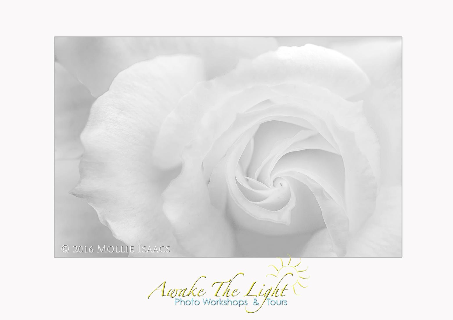 awake the light a rose by any other name rh awakethelight blogspot com