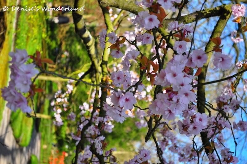 Japanse Tuin, Clingendael Park
