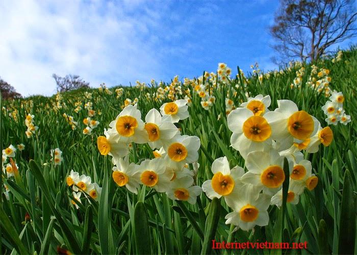 Những Đóa Hoa Thường Cắm Trong Gia Đình Ngày Tết 2