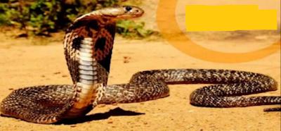 saanpon ka zahar utarne ka mantra, snake poison,