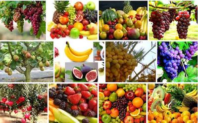 buah buahan di surga