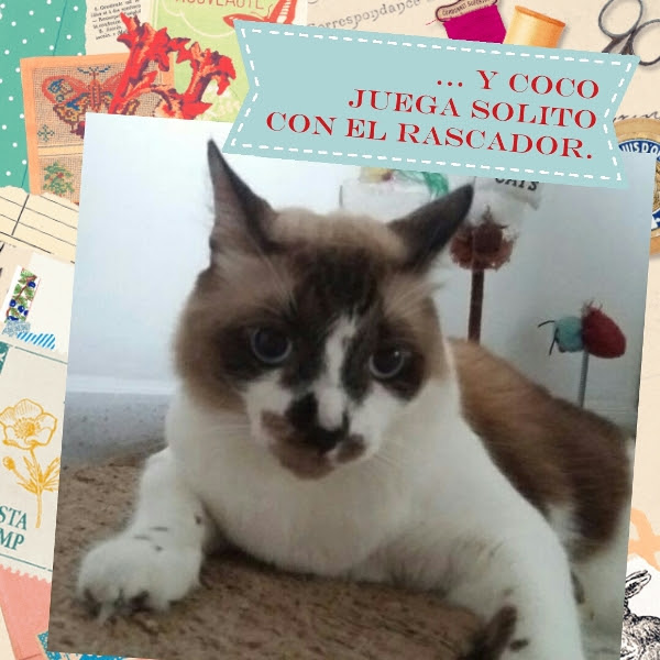Gatos, Coco
