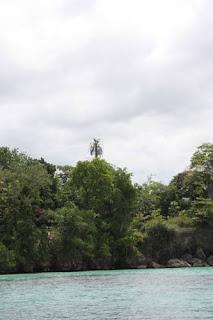 Tall Tree.