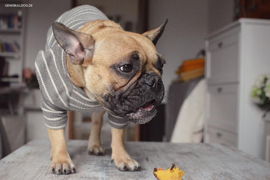 Hundeblog Rezept: Karotten Muffins für Hunde backen