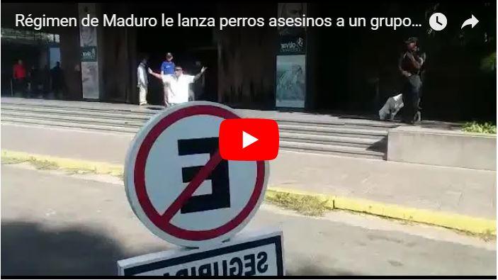 Régimen le lanza perros asesinos a un grupo de 200 ancianos pensionados que protestaban
