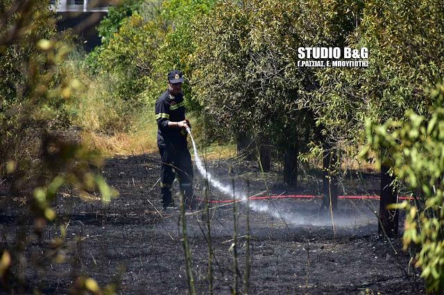 Πρωτομηνιά με πυρκαγιά στην Αργολίδα (βίντεο)