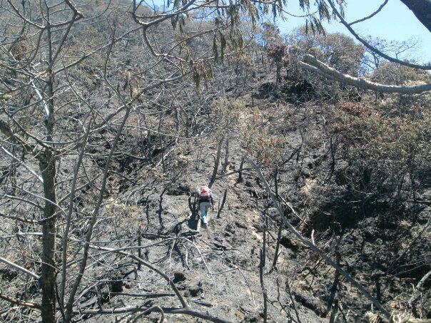 Kebakaran padang edelweis Jawa Barat