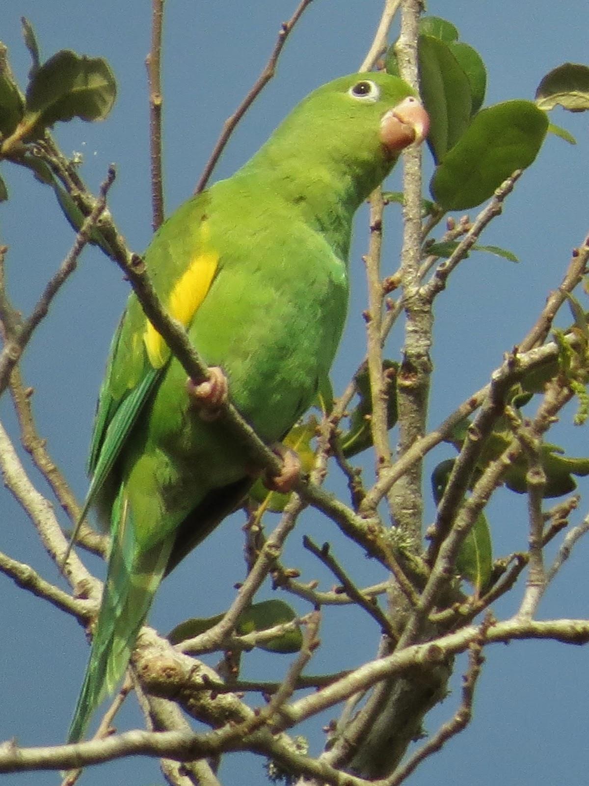 Florida Suncoast Birding March
