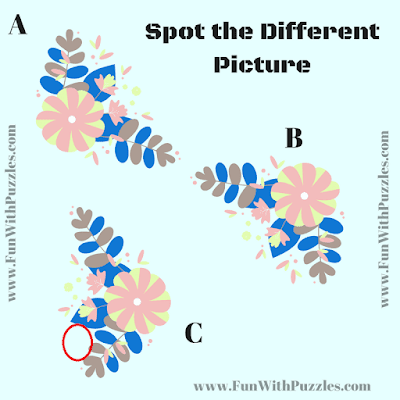 Answer of Find the Odd One Out Picture Puzzle