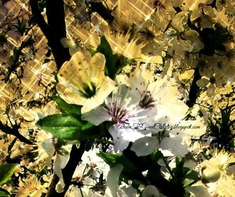 """""""Palm Sunday is a Christian moveable feast that falls on the Sunday before Easter. The feast commemorates Jesus' triumphal entry into Jerusalem, an event mentioned in each of the four canonical Gospels."""" In Romania and Moldova is celebrated on April 5, 2015 """"In Romania and Moldova, Palm Sunday is known as Duminica Floriilor or simply Florii, translating Flowers' Sunday.""""  """"Duminica Floriilor (sau Florii) este o sărbătoare creștină fără dată exactă, comemorată întotdeauna în ultima duminică dinaintea Paștelui."""" read more on wikipedia"""