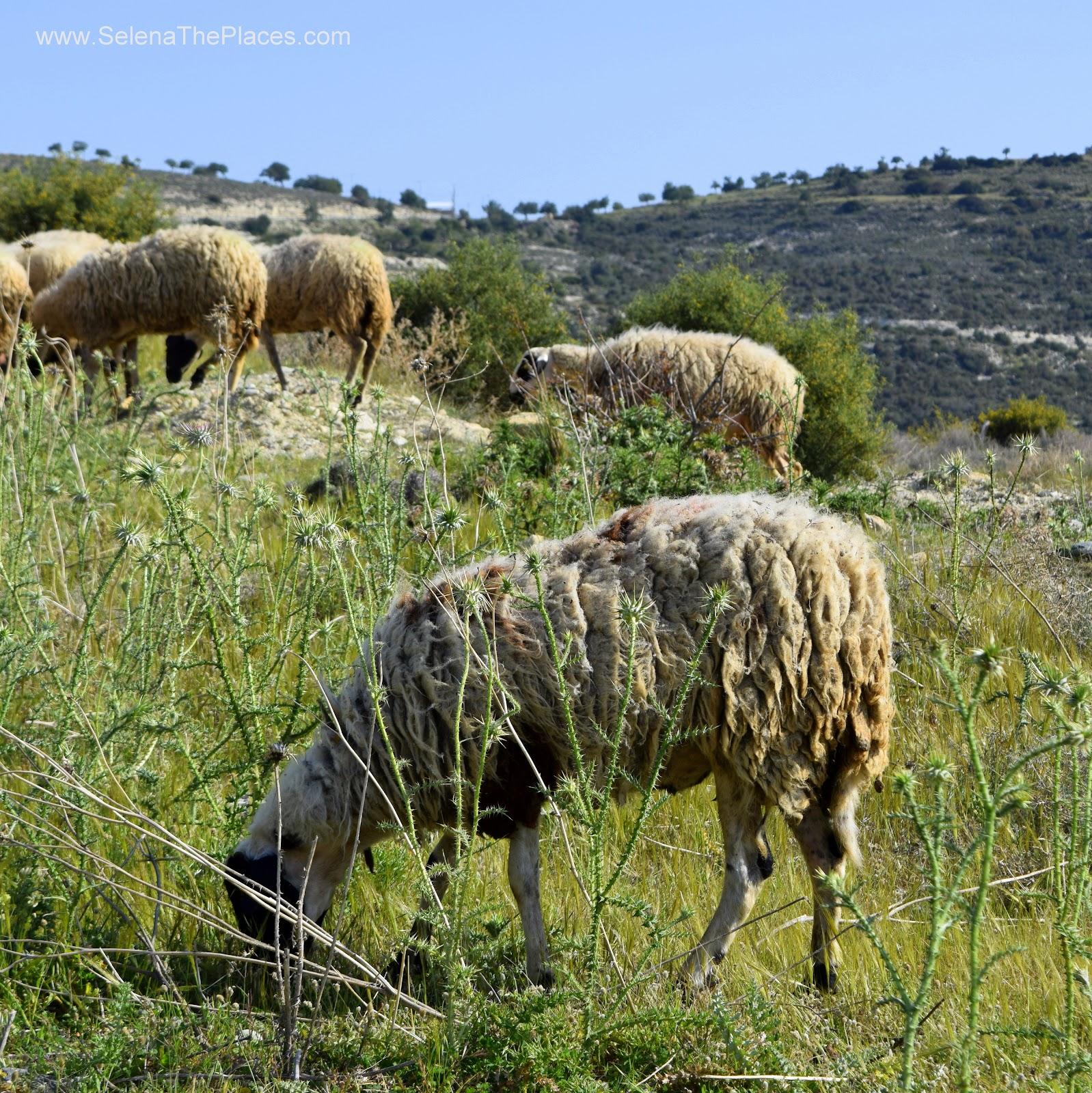 A Cyprus Road Trip