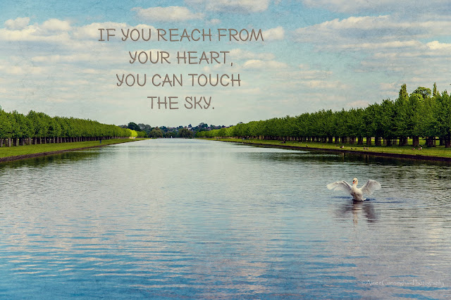 swan, river, London, England, quotes, free quotes, poster art, reach from your heart, motivational, inspirational