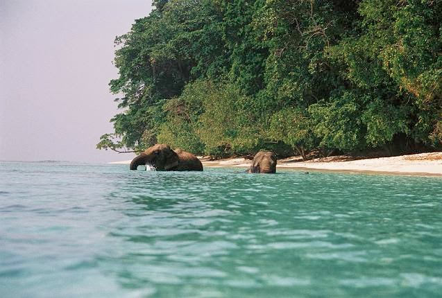 Havelock Island, the Andamans