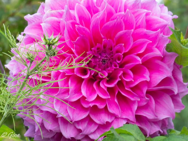 Au jardin de gine octobre 2015 for Jardin lune octobre 2015