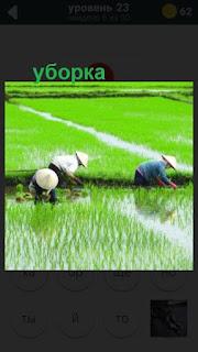 происходит уборка риса на полях 23 уровень в игре 470 слов