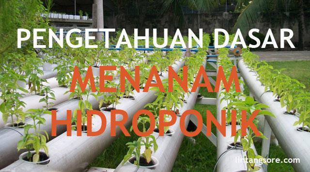 dasar-dasar menanam hidroponik