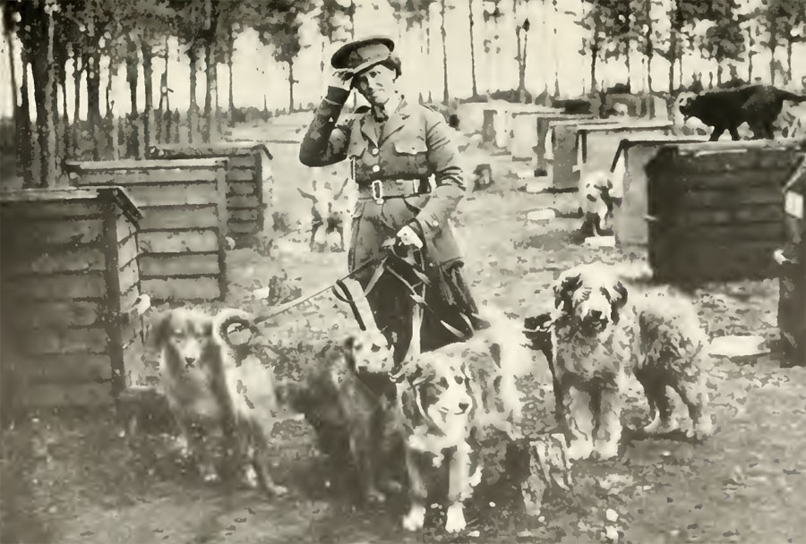 What Is The Army S Preferred War Dog