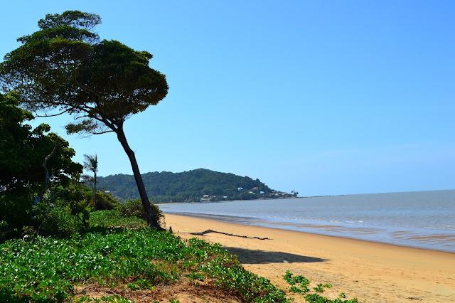 Guyane, Montjoly, Rémire, Cayenne les salines, randonnée, plage, marais, marécage, lagune, balader en Guyane