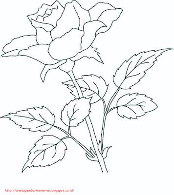 gambar bunga mawar - 4