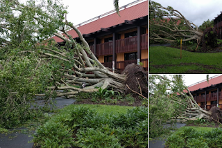 Irma at Disney uproots tree near Magic Kingdom