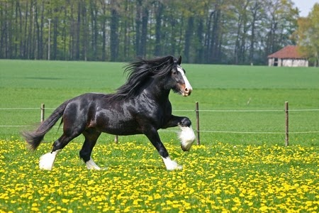 10 Most Beautiful Horses In The World Explore Amazing World
