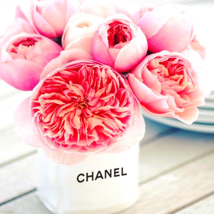 Good-Morning-Beauties-Chanel-Flowers-Vivi-Brizuela-PinkOrchidMakeup.JPG