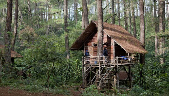 Rumah Pohon Leo Tripcanvas