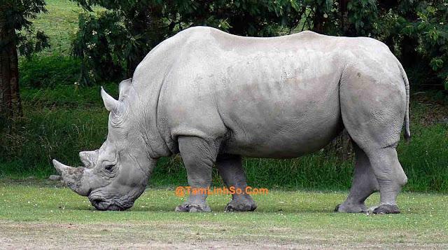 Bạn mơ thấy Tê giác và không biết Tê giác là số mấy?