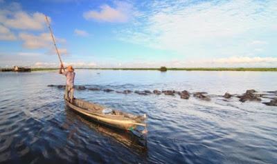 wisata-kerbau-rawa-danau-panggang-amuntai-hsu