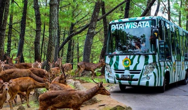 Safari Adventure Taman Safari Prigen Pasuruan Jawa Timur