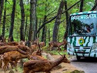 Taman Safari Prigen: Wahana, Fasilitas, Harga Tiket, Promo & Jam Buka