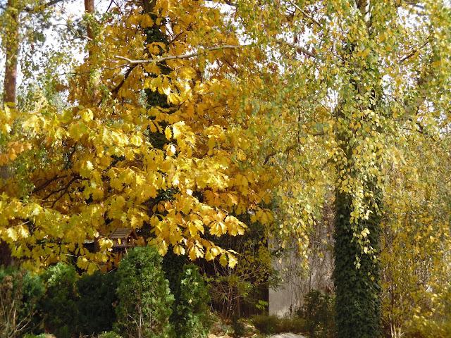 liście dębu i brzozy jesienią