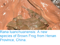 http://sciencythoughts.blogspot.co.uk/2017/09/rana-luanchuanensis-new-species-of.html