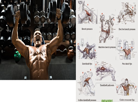 Top Chest Workout Routine for Muscle Mass