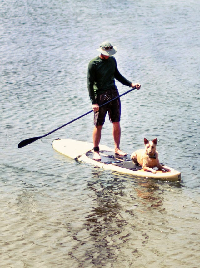 man and dog on paddle board