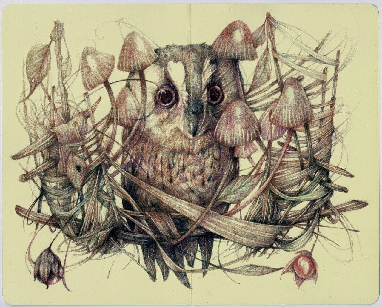 09-Marco-Mazzoni-Surreal-Animal-Drawings-www-designstack-co